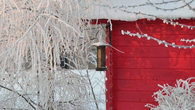 Zima na zahradě si zaslouží péči. Jakou?