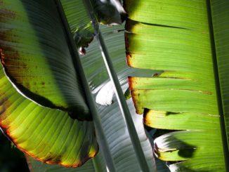 Tipy na pokojové rostliny, které toho moc nepotřebují aneb něco pro lenochy