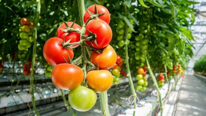 Pěstujeme rostliny ve fóliovníku a v pařeništi. Jaké mají podmínky?