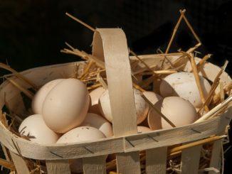 Zdravá vajíčka z domácího chovu si pořizuje stále více domácností